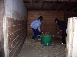 Mucking the stalls at the barn.